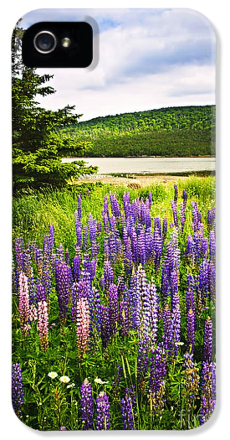 Flowers IPhone 5 / 5s Case featuring the photograph Lupin Flowers In Newfoundland by Elena Elisseeva
