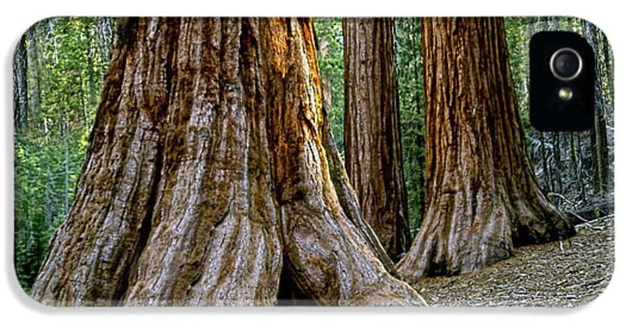 Redwoods IPhone 5 / 5s Case featuring the photograph Mariposa Grove by Bill Gallagher
