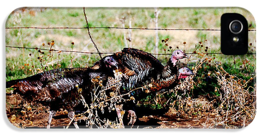 Wild IPhone 5 / 5s Case featuring the photograph Wild Turkeys by Thea Wolff