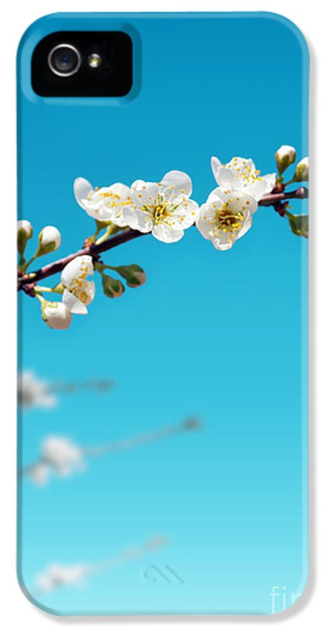 Abstract IPhone 5 / 5s Case featuring the photograph Almond Branch by Carlos Caetano