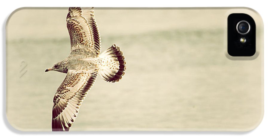 Herring Gull IPhone 5 / 5s Case featuring the photograph Herring Gull In Flight by Karol Livote