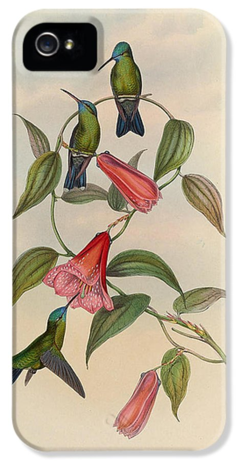 Hummingbirds IPhone 5 / 5s Case featuring the painting Hummingbirds by Philip Ralley
