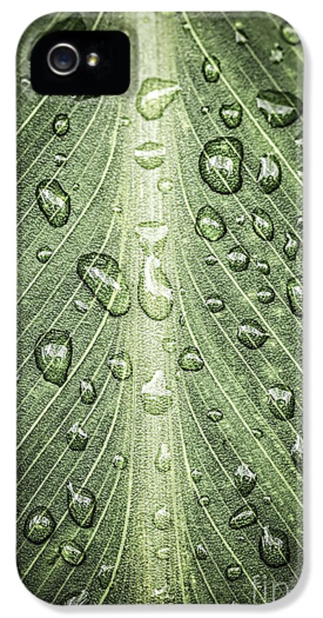 Plant IPhone 5 / 5s Case featuring the photograph Raindrops On Green Leaf by Elena Elisseeva