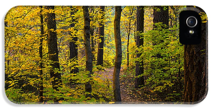 Forest IPhone 5 / 5s Case featuring the photograph The Magic Forest by Saija Lehtonen