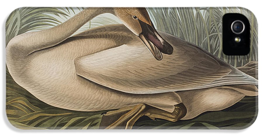 Birds IPhone 5 / 5s Case featuring the painting Trumpeter Swan by John James Audubon