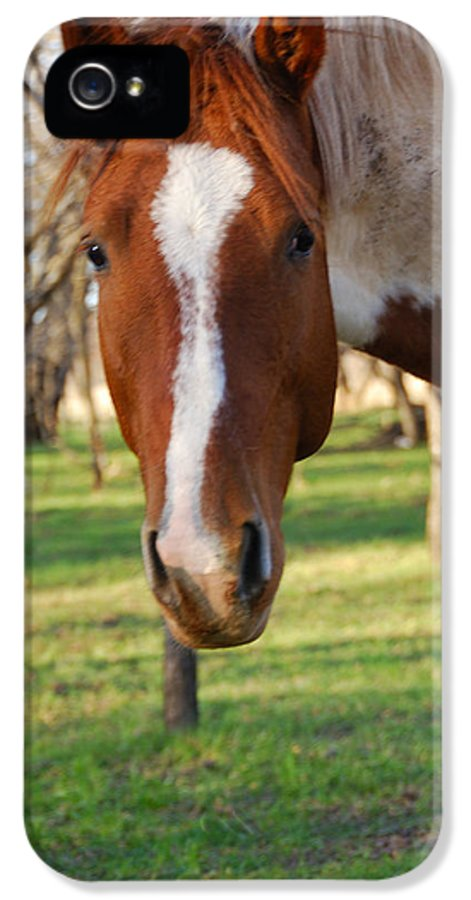Wild IPhone 5 / 5s Case featuring the photograph Paint Stallion by Thea Wolff