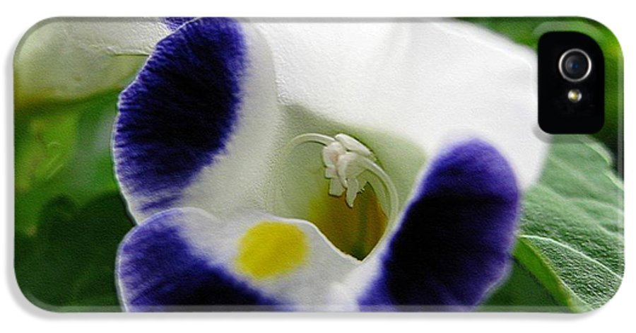Mccombie IPhone 5 / 5s Case featuring the photograph Torenia From The Duchess Mix by J McCombie