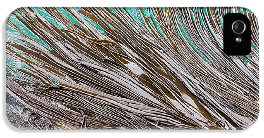 Abstract IPhone 5 / 5s Case featuring the photograph Bull Kelp Blades On Surface Background Texture by Stephan Pietzko