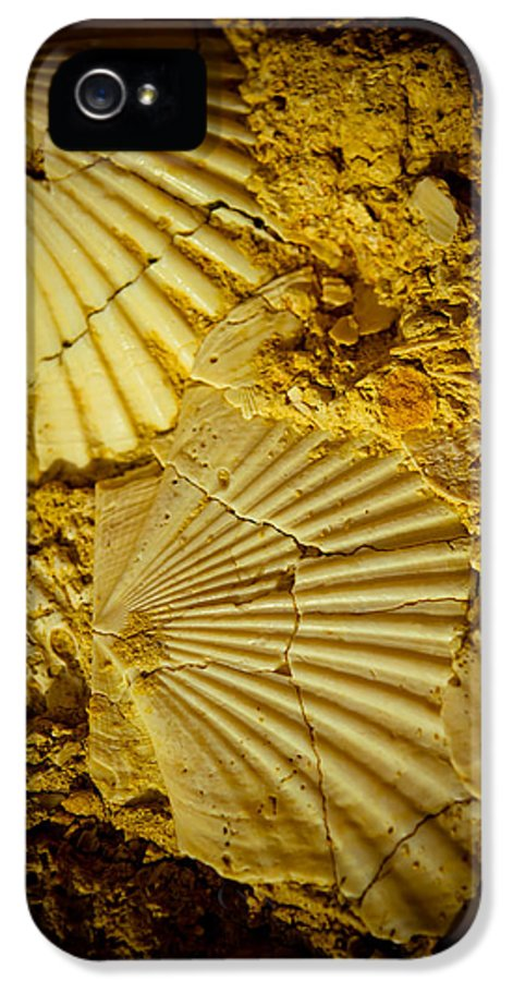 Outdoor IPhone 5 / 5s Case featuring the photograph Seashell In Stone by Raimond Klavins