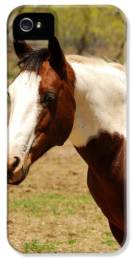 Wild IPhone 5 / 5s Case featuring the photograph Paint Mare by Thea Wolff