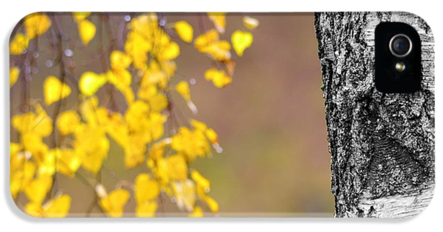 Birch IPhone 5 / 5s Case featuring the photograph A Birch At The Lake by Toppart Sweden