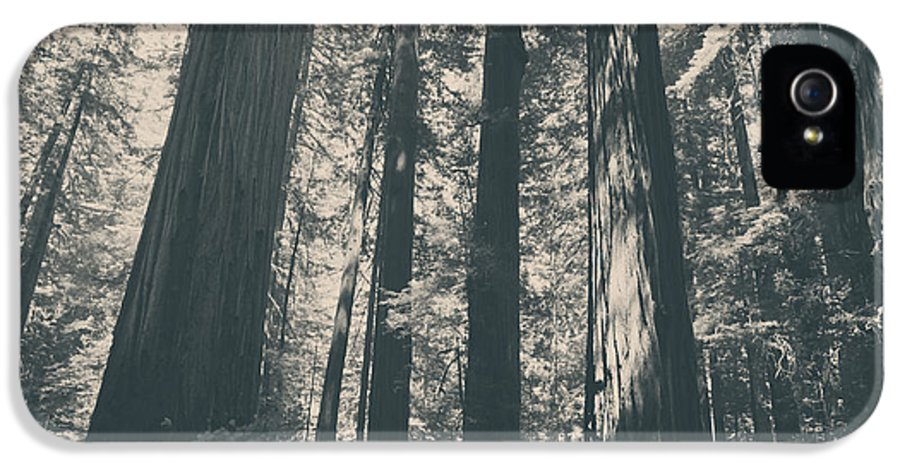Humboldt Redwoods State Park IPhone 5 / 5s Case featuring the photograph A Breath Of Fresh Air by Laurie Search