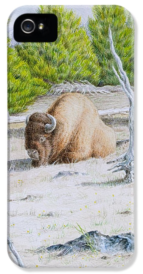 Buffalo IPhone 5 / 5s Case featuring the painting A Buffalo Sits In Yellowstone by Michele Myers