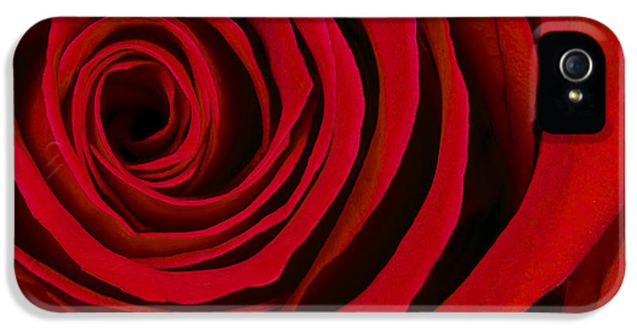 3scape Photos IPhone 5 / 5s Case featuring the photograph A Rose For Valentine's Day by Adam Romanowicz