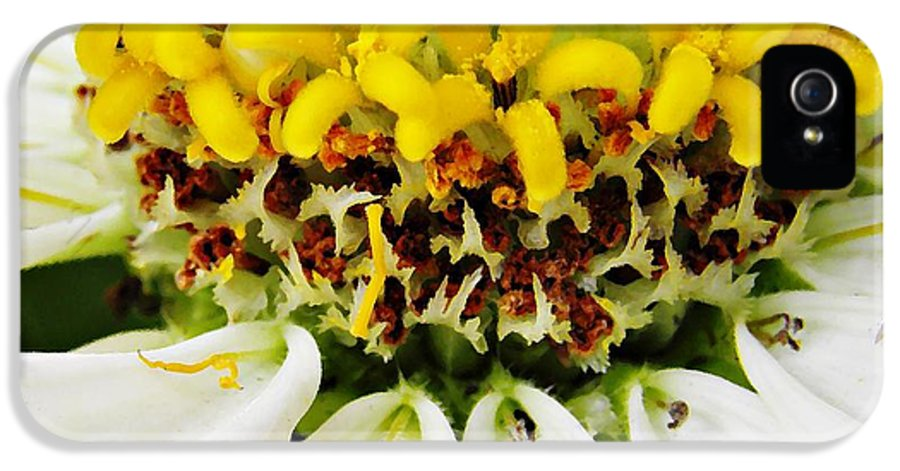 Flower IPhone 5 / 5s Case featuring the photograph A Small Crown Of Glory by Sarah Loft