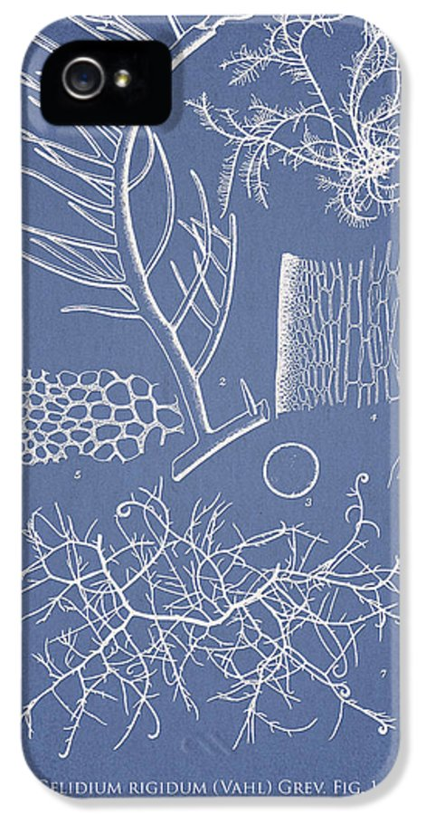 Algae IPhone 5 / 5s Case featuring the drawing Algae by Aged Pixel