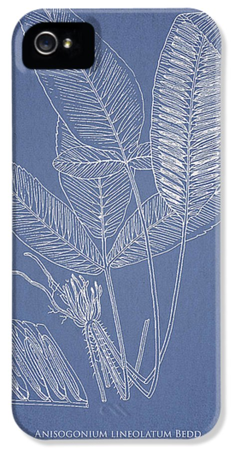 Fern IPhone 5 / 5s Case featuring the drawing Anisogonium Lineolatum by Aged Pixel