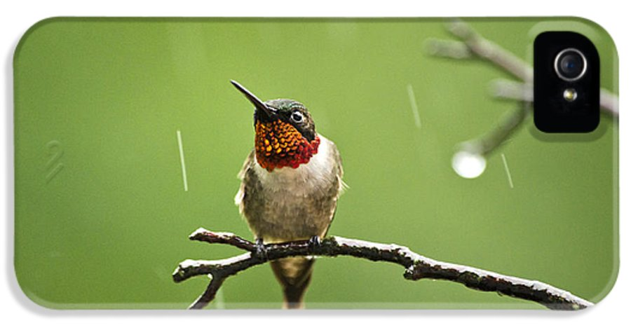 Hummingbird IPhone 5 / 5s Case featuring the photograph Another Rainy Day Hummingbird by Christina Rollo