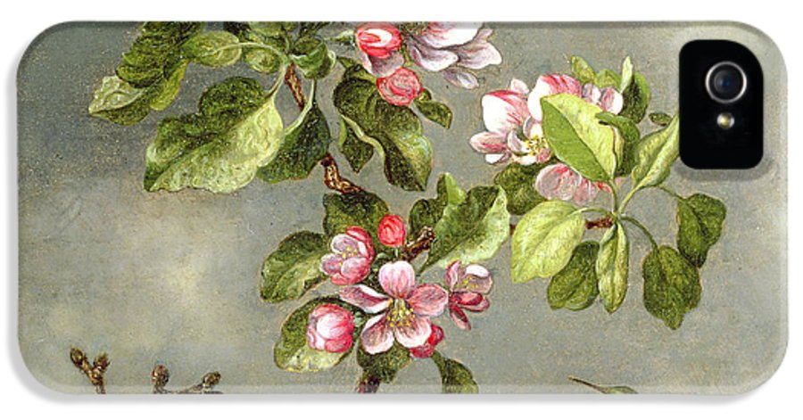 Floral IPhone 5 / 5s Case featuring the painting Apple Blossoms And A Hummingbird by Martin Johnson Heade
