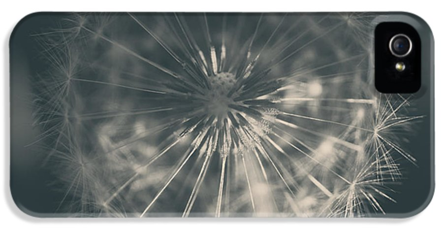Dandelions IPhone 5 / 5s Case featuring the photograph As Long As The Sun Still Shines by Laurie Search