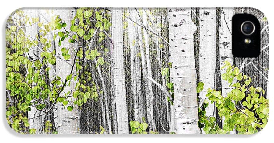 Aspen IPhone 5 / 5s Case featuring the photograph Aspen Grove by Elena Elisseeva