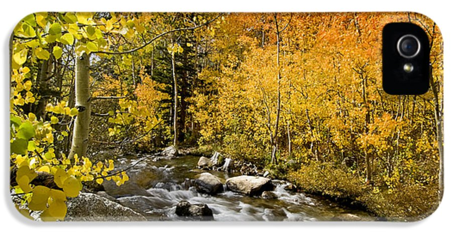 Yellow IPhone 5 / 5s Case featuring the photograph Aspens At Bishop Creek by Cat Connor
