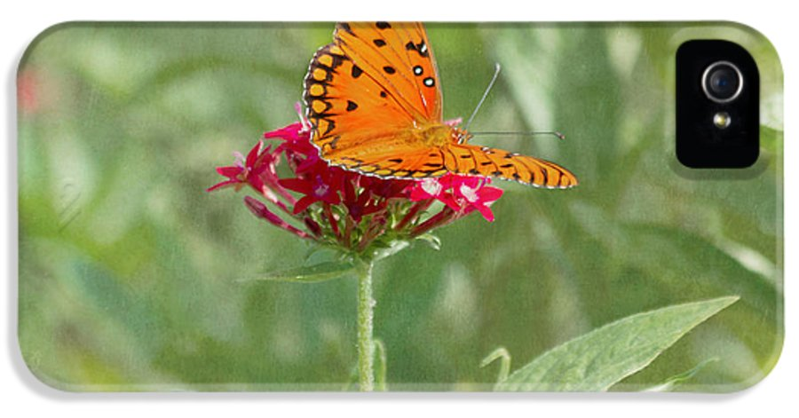 Butterfly IPhone 5 / 5s Case featuring the photograph At Rest - Gulf Fritillary Butterfly by Kim Hojnacki