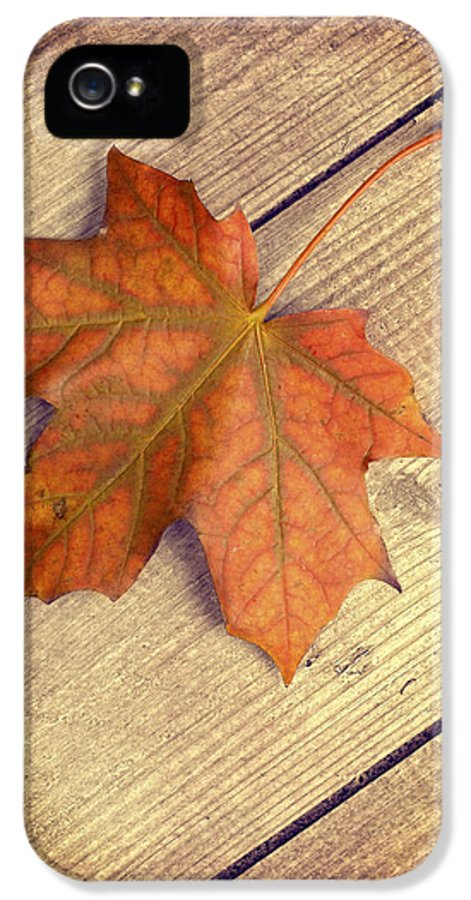 Autumn IPhone 5 / 5s Case featuring the photograph Autumn Leaf by Amanda And Christopher Elwell