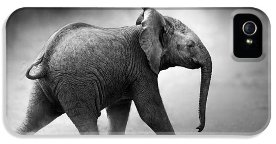 Elephant IPhone 5 / 5s Case featuring the photograph Baby Elephant Running by Johan Swanepoel