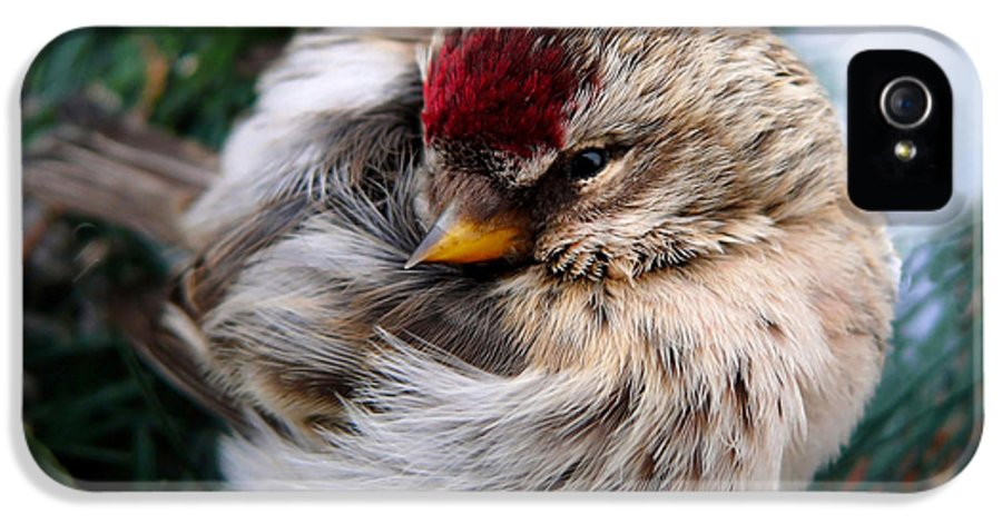 Bird IPhone 5 / 5s Case featuring the photograph Ball Of Feathers by Christina Rollo
