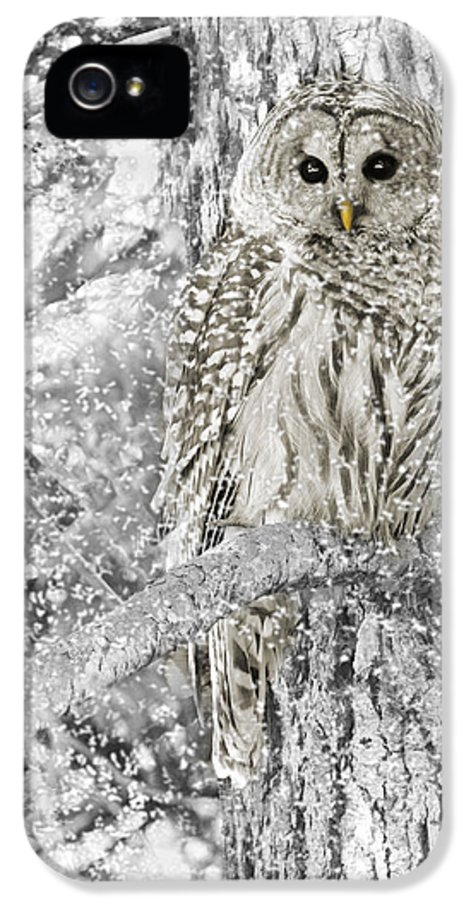Owl IPhone 5 / 5s Case featuring the photograph Barred Owl Snowy Day In The Forest by Jennie Marie Schell