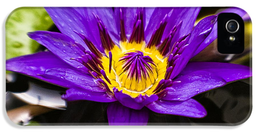 Lotus IPhone 5 / 5s Case featuring the photograph Bayou Beauty by Scott Pellegrin