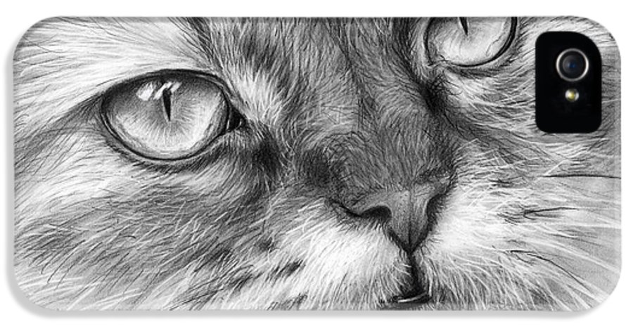 Beautiful Cat IPhone 5 / 5s Case featuring the drawing Beautiful Cat by Olga Shvartsur