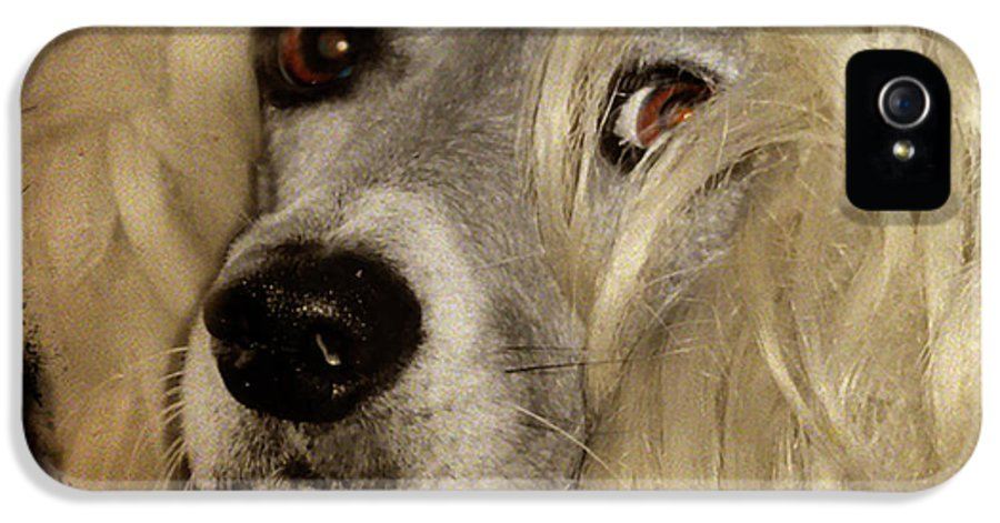 Dog IPhone 5 / 5s Case featuring the photograph Beauty by Gothicolors Donna