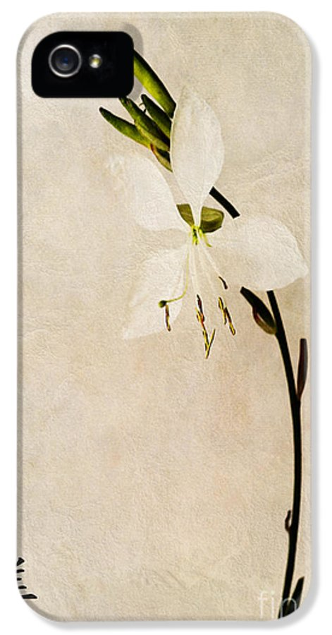 Beauty Symbol Canvas IPhone 5 / 5s Case featuring the photograph Beauty by John Edwards