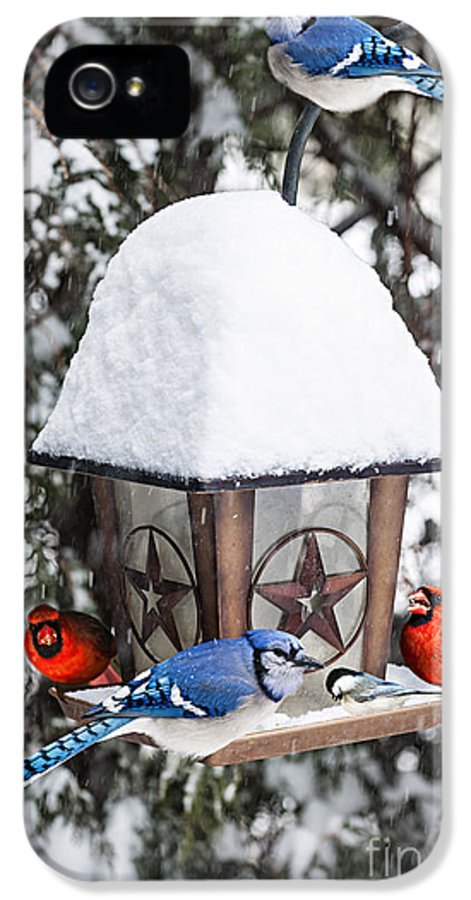 Birds IPhone 5 / 5s Case featuring the photograph Birds On Bird Feeder In Winter by Elena Elisseeva
