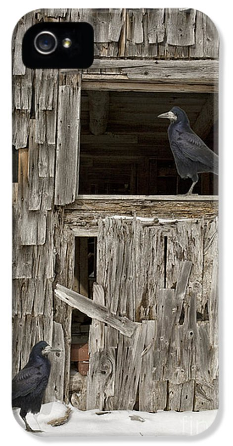 Crow IPhone 5 / 5s Case featuring the photograph Black Crows At The Old Barn by Edward Fielding