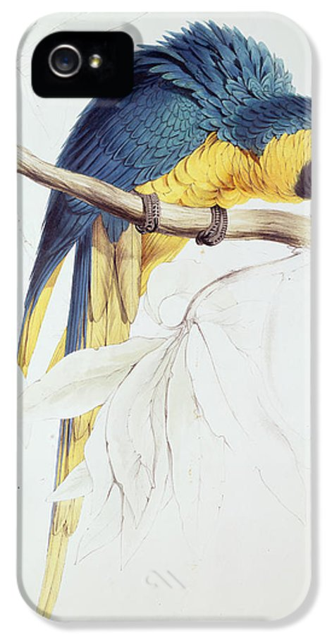 Parrot IPhone 5 / 5s Case featuring the painting Blue And Yellow Macaw by Edward Lear
