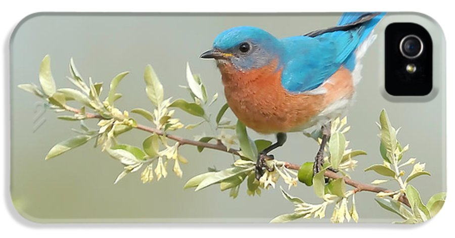 Bluebird IPhone 5 / 5s Case featuring the photograph Bluebird Floral by William Jobes