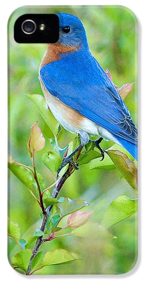 Bluebird IPhone 5 / 5s Case featuring the photograph Bluebird Joy by William Jobes