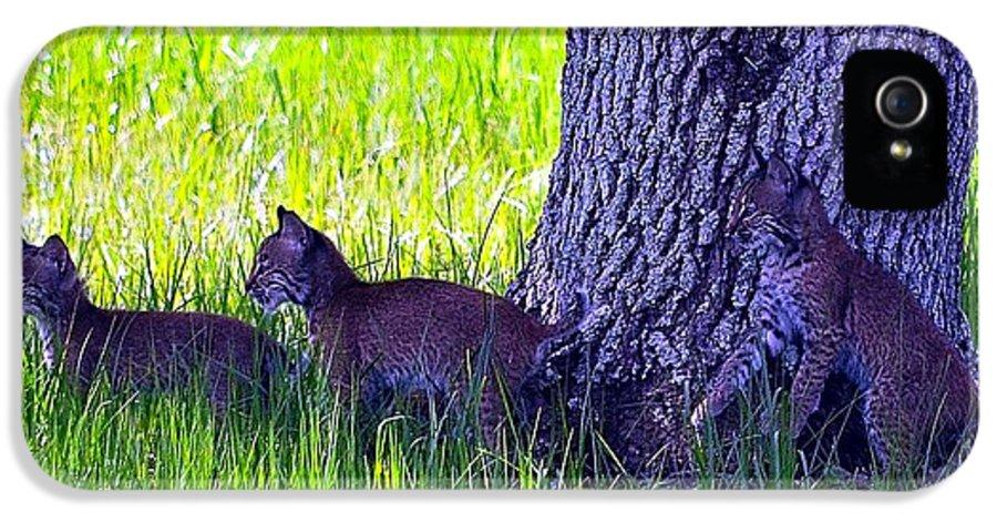 Bobcat IPhone 5 / 5s Case featuring the photograph Bobcat Cubs by Diana Berkofsky