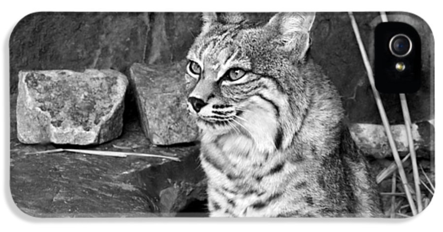 Bobcat IPhone 5 / 5s Case featuring the photograph Bobcat by Nikolyn McDonald