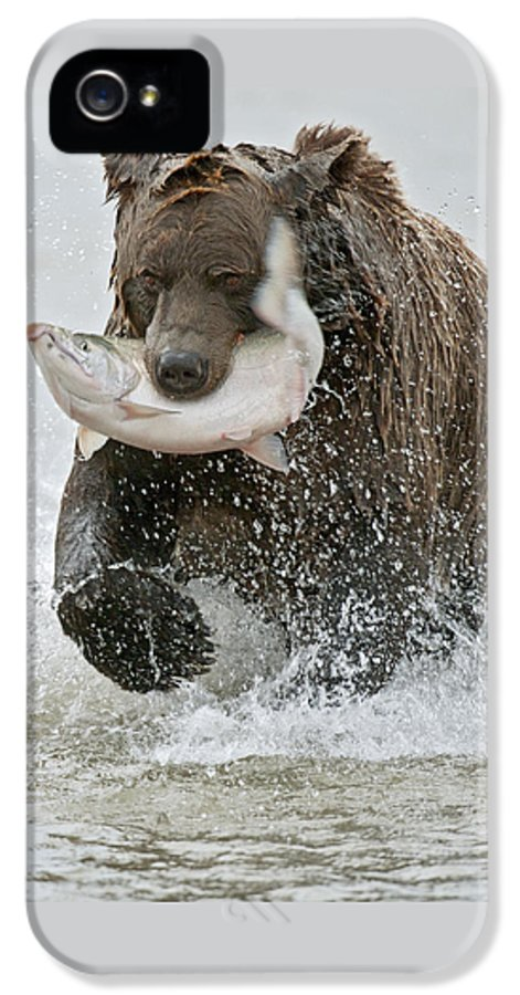 Wild IPhone 5 / 5s Case featuring the photograph Brown Bear With Salmon Catch by Gary Langley