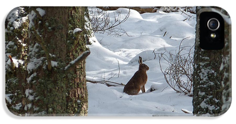 Brown Hare IPhone 5 / 5s Case featuring the photograph Brown Hare - Snow Wood by Phil Banks