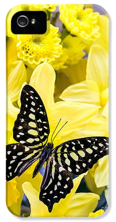 Daffodil IPhone 5 / 5s Case featuring the photograph Butterfly Among The Daffodils by Edward Fielding
