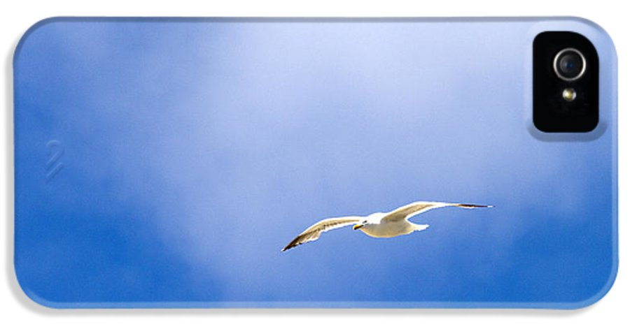 Seagull IPhone 5 / 5s Case featuring the photograph Caught In The Light by Rebecca Cozart