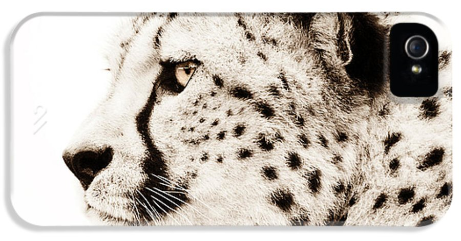 Wildlife IPhone 5 / 5s Case featuring the photograph Cheetah by Jacky Gerritsen