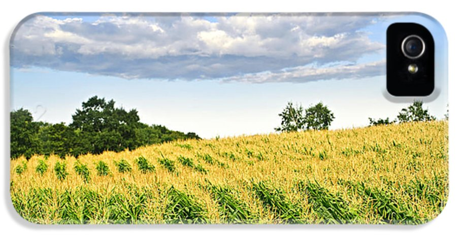 Agriculture IPhone 5 / 5s Case featuring the photograph Corn Field by Elena Elisseeva