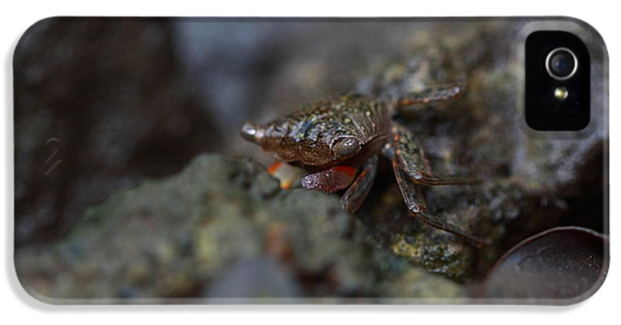 Archaeology IPhone 5 / 5s Case featuring the photograph Crab In Mangrove Forest In Los Haitises National Park Dominican Republic by Andrei Filippov