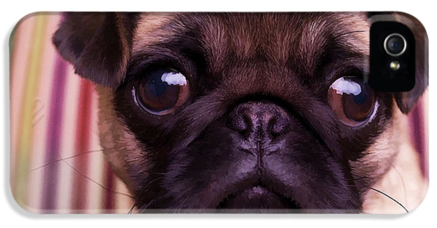 Pug Puppy Cute Dog Breed Portrait Pet Animal Toy Lap IPhone 5 / 5s Case featuring the photograph Cute Pug Puppy by Edward Fielding